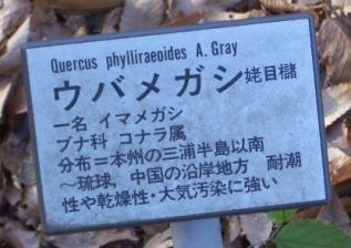 katakana-plant-name